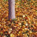 Bild Herbst Laub