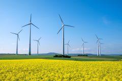 Bild Wiese mit gelben Blumen und Windkrafträdern