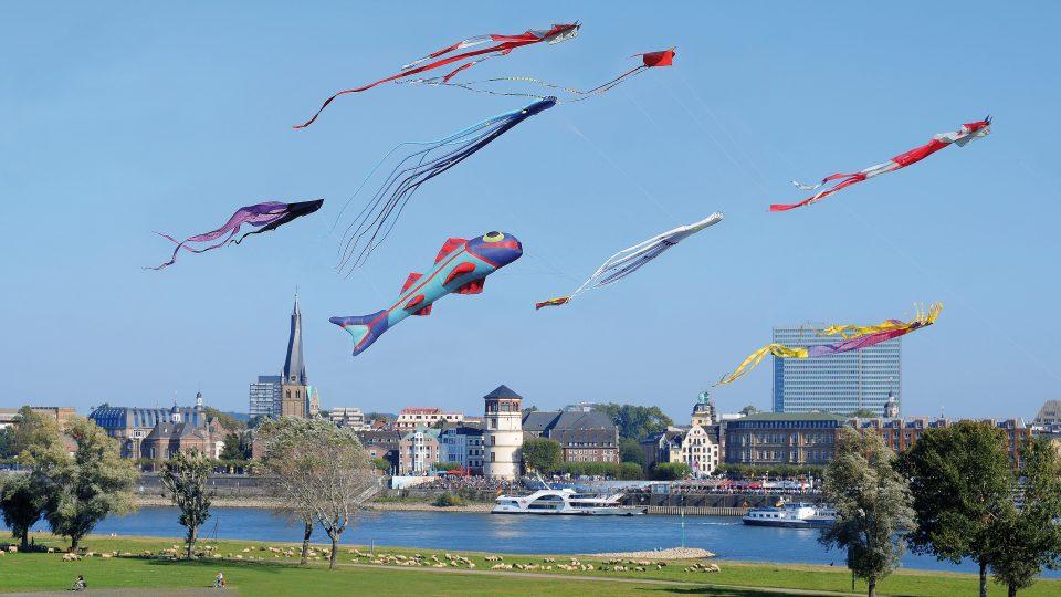 Fliegende Drachen auf Wiese am Rhein