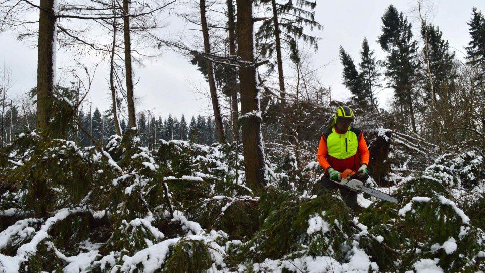 """Waldarbeiter mit Motorsäge bei Aufräumarbeiten nach dem Sturm """"Friederike""""."""
