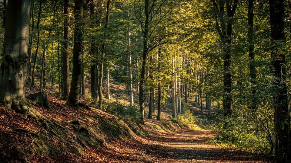 Bild mit Waldweg
