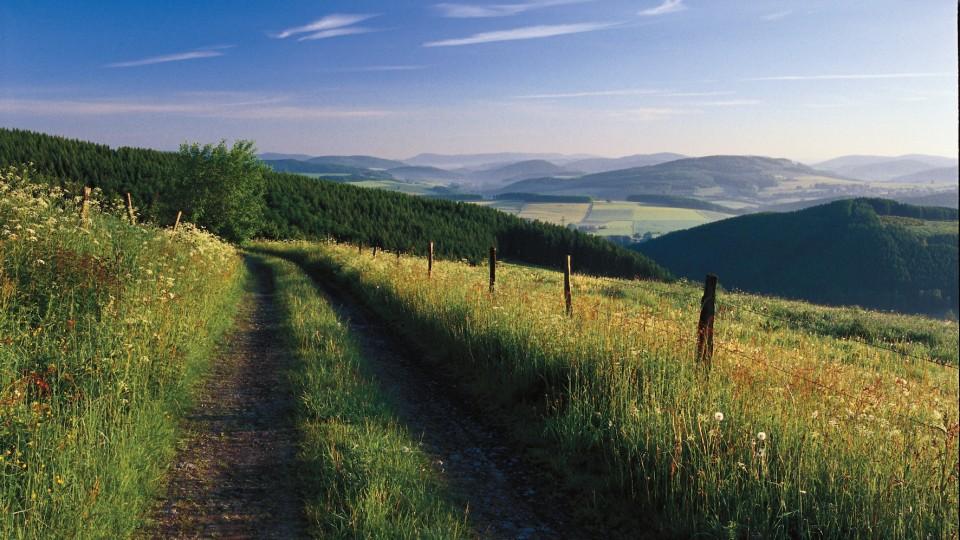 Das Bild zeigt einen Wanderweg im Sauerland.